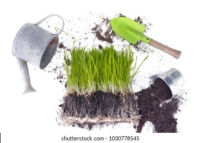 sprout of grass in soil with gardening tools on white background