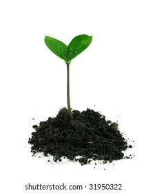 A sprout in a ground isolated on a white background