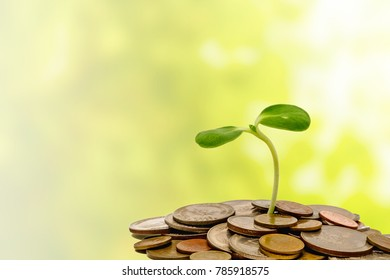 Sprout growing on coins on blurred green natural background for business and financial growth concept