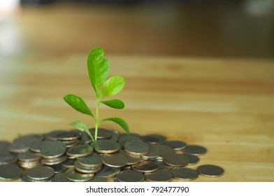 Sprout is growing on coins, In saving money concept.