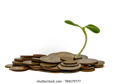Sprout growing on coins on white background for business and financial growth concept