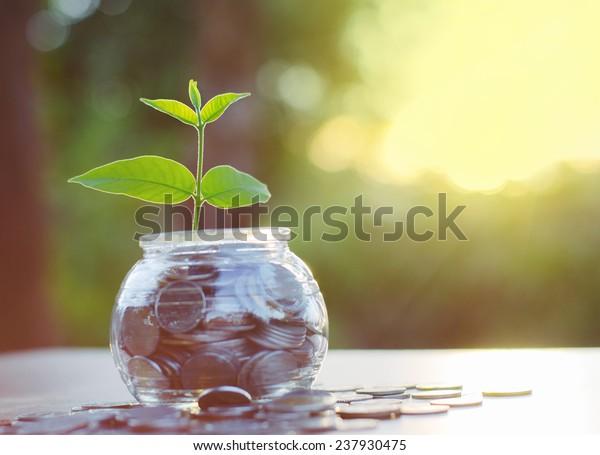 Sprout wächst auf Glaspigmentenbank mit Sonnenuntergang bei Sparen des Geldkonzepts