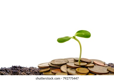 Sprout growing from soil with money coins on white background for business and financial growth concept