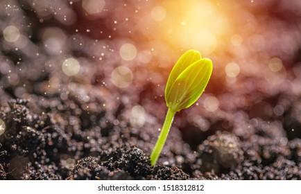 Sprout grows through urban asphalt ground