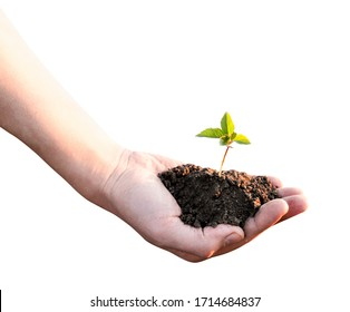 Sprout and a handful of earth in a hand on a white background. Isolated