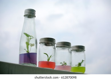 Sprout plants of orchids and sedge herbs in glass bottle with science soil layer decoration with city blue sky background