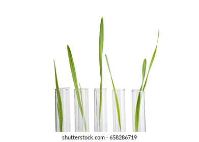 sprout in a test tube