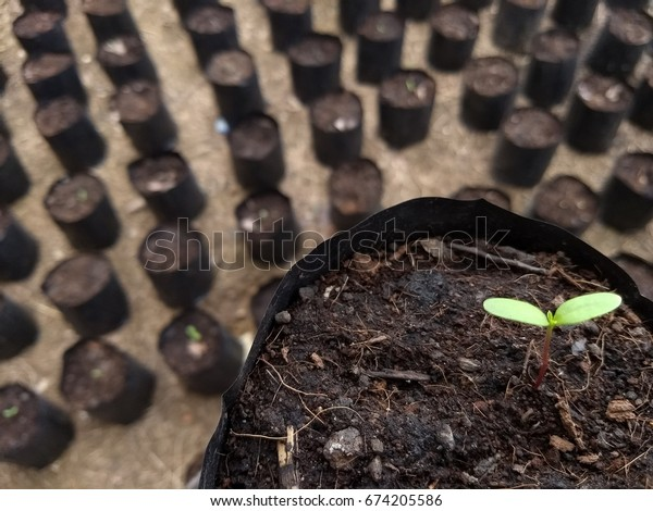 sprout or Young Pant grow up that waiting water and seeding to grow up