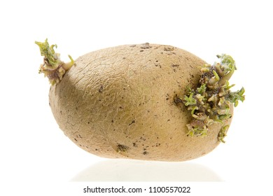 Sprouted Potato Isolated