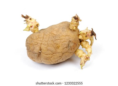 Sprouted potato isolated on white