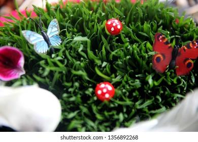 sprouted wheat novruz bairam green grass tradition Baku Azerbaijan