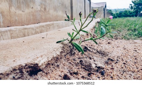 Sprouting green flower on a dry land