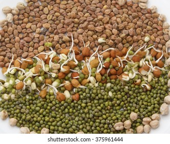 sprouts of chickpeas ,gram and and green lentil