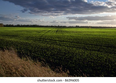 Sprouts in front of sunset ?countryside view