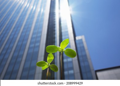 Sprouts And High Building