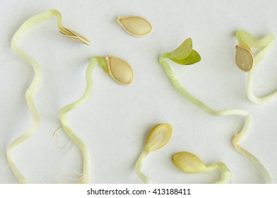 Sprouts and seeds.