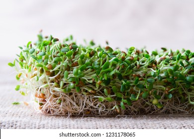 Sprouts and sprout seeds, crunchy clover