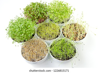 Sprouts in white bowls from above. Sprouting microgreens, shoots of alfalfa, Chinese cabbage, garlic, kale, lentils and radish in potting compost. Green seedlings, young plants, cotyledons. Food photo