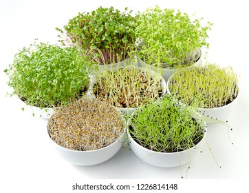Sprouts in white bowls. Seven sprouting microgreens. Shoots of alfalfa, Chinese cabbage, garlic, kale, lentils and radish in potting compost. Green seedlings, young plants and cotyledons. Food photo.