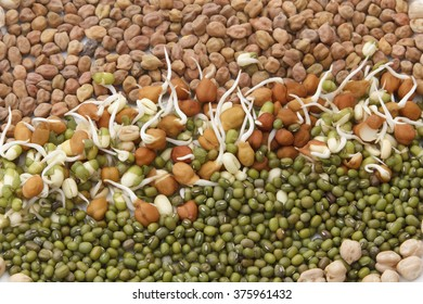 sprouts,gram and and green lentil