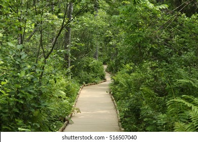 Spruce Bog Boardwalk at Bangor City Forest, Maine