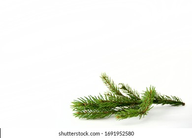 spruce branch lies isolated on a white background