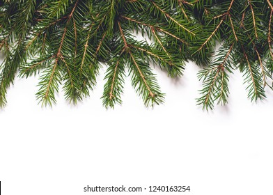 Spruce branches isolated on white background. Christmas template for your design.