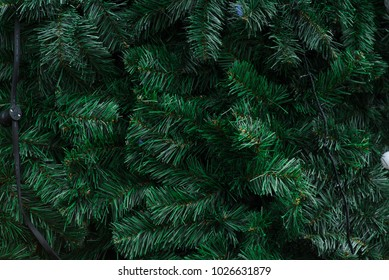 Spruce branches texture and background