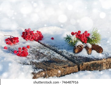 Spruce bumps with red rowan on an old snow-covered table