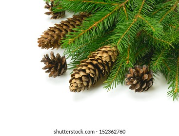 spruce and cones over white