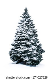 spruce covered with snow isolated on white background