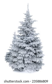 Spruce covered with snow isolated on white background, winter forest