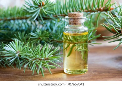 Spruce essential oil in a bottle, with fresh spruce twigs in the background