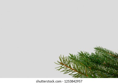 Spruce, fir tree branches on grey background with copy space