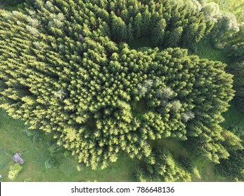 Spruce forest aerial view - Lithuanian forests - Lithuanian nature aerial photo - Green forest background