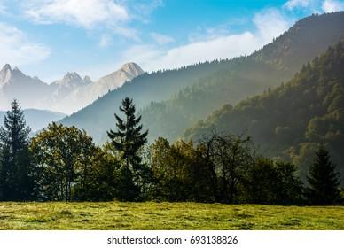 Spruce forest on the hillside meadow in High Tatras mountain ridge. Gorgeous scenery mountainous scenery in early autumn