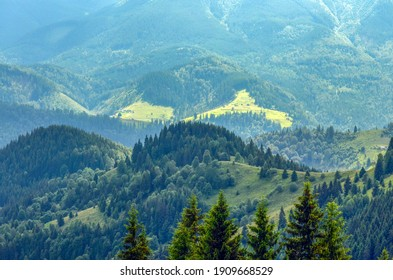 Spruce on the background of sunlit forest slopes