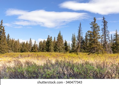 Spruce Transitional Boreal Forest Zone