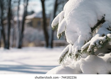 spruce tree in city covered with snow after snowfall