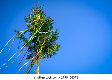spruce tree with colorful ribbons set high on the tree trunk for the occasion of wedding