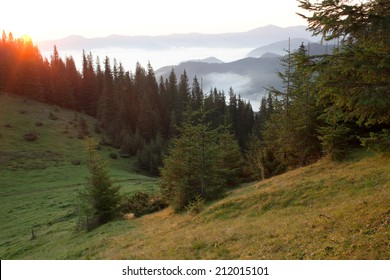 Spruces and mountains covered in mist at sunrise
