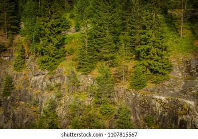 spruces on the mountain slope, summer day