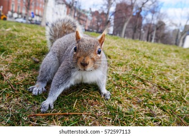 Sqirrel in a Park in Boston