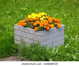 Square concrete flowerbed with orange asters