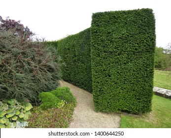 A square ended topiary box tree hedge.