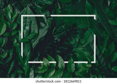 Square frame, Creative layout made of tropical flowers and leaves with paper card note. Flat lay. Blank for advertising card or invitation. Flat lay. Nature concept.