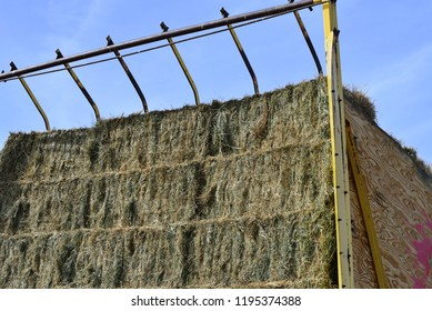 Square hay bales on a filled stacker.