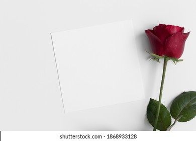 Square invitation card mockup with a red rose.