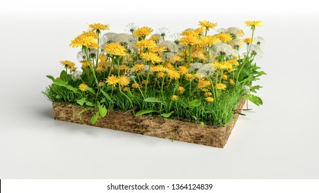 Square of mini garden with flowers and green grass field over white background, 3D Illustration