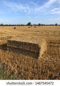 Square straw bales in a harvested corn field. UK countryside at sunrise. Agricultural background.